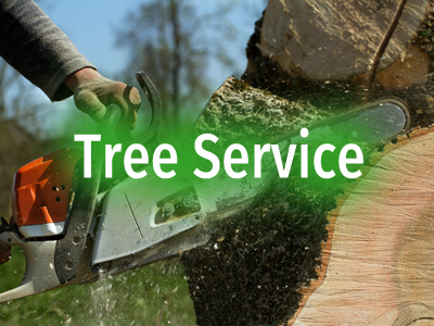 Landscaping Amp Tree Care Service Pest Control Tampa Fl